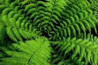 Árnyéktűrő évelőkkel Neked is lehet színpompás kerted!