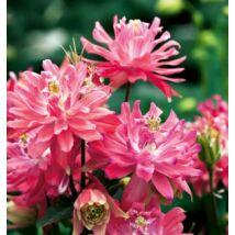 Harangláb 'Double Pink'