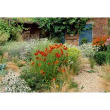Mediterrán kert Iringóval, Napfényvirággal és Levendulával