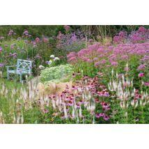Préri stílusú kert Kasvirággal, Veronikával és Varjúhájjal