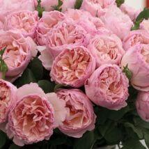 Princesse Charlene de Monaco ® romantikus rózsa