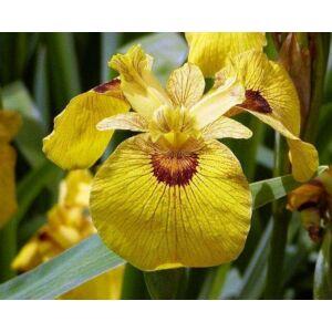 Botanikai nőszirom - Roy Davidson