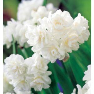 Csokrosvirágú Nárcisz - ERLI CHEER (1 db)