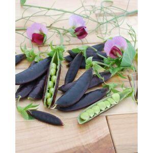 Borsó, Zsenge és cukorborsó, 'Purple Magnolia'