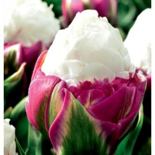 Tulipán - ICE CREAM